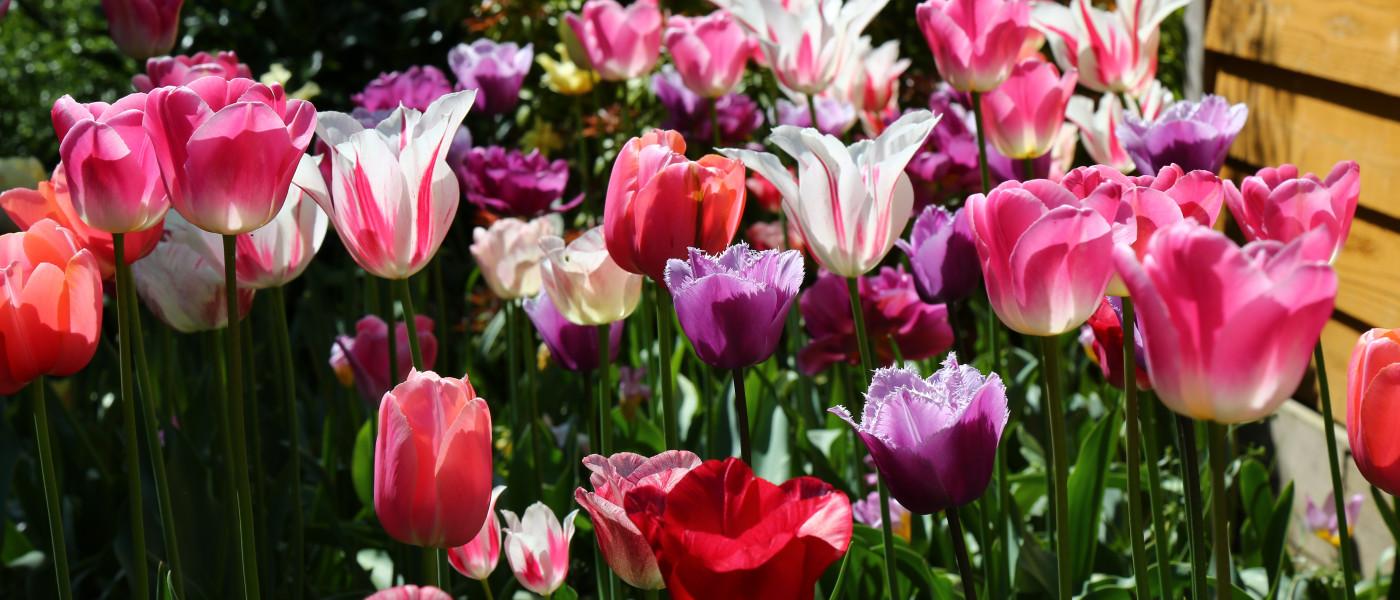 Auf Entdeckungsreise für den Frühlingsgarten