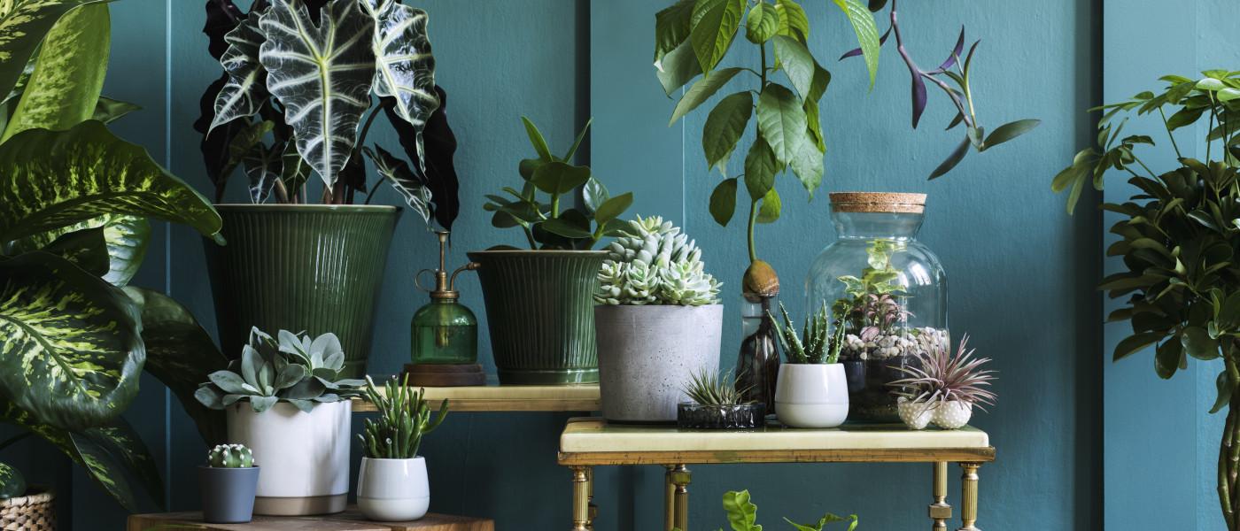 Das solltest Du als Indoor-Gärtner wissen