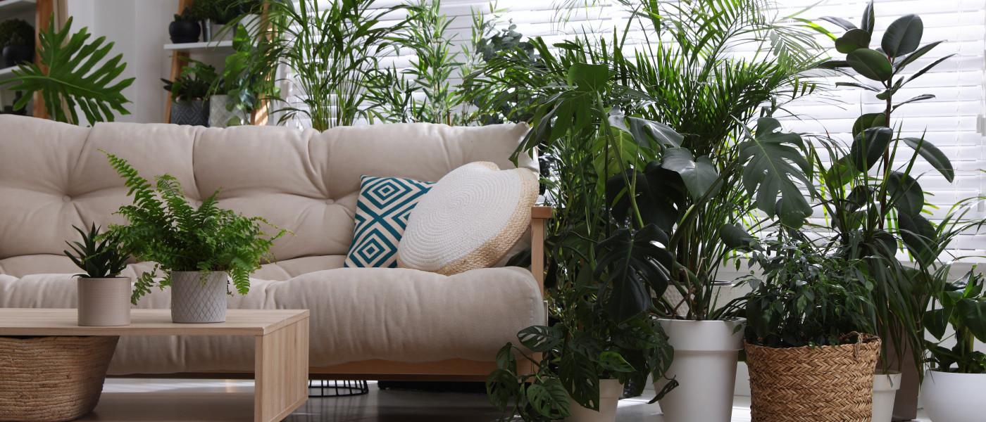 Grünpflanzen - Styling Tipps für ein schönes Zuhause