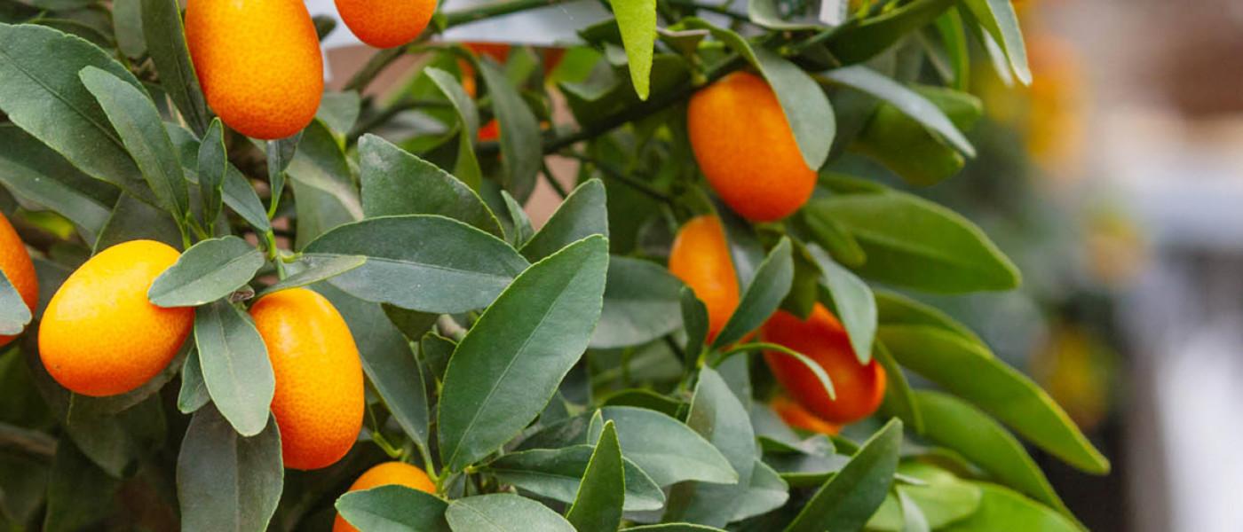 Mediterraner Fruchtgenuss