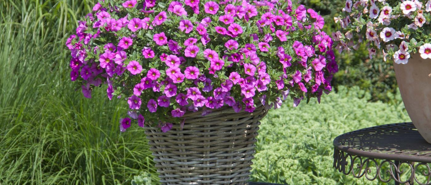 So kommen die Balkonpflanzen gut durch den Sommer