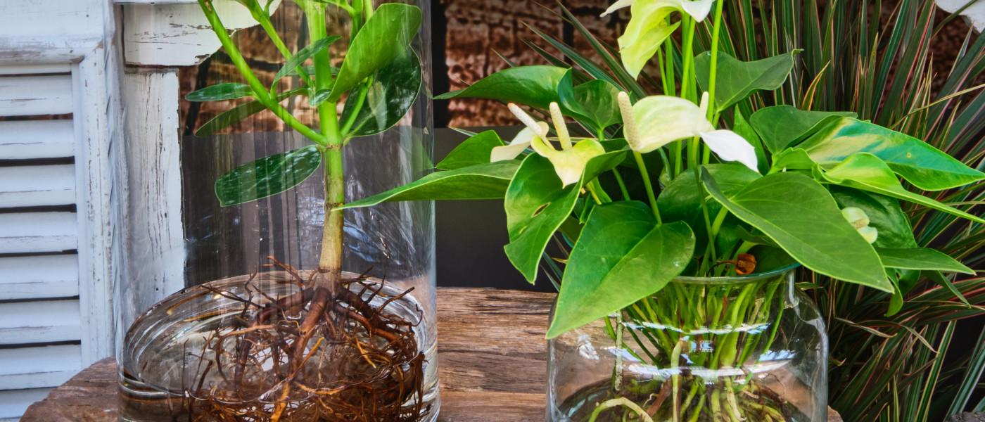 """""""Water Plants"""" eine ungewöhnliche, neue Art mit Zimmerpflanzen zu gestalten"""