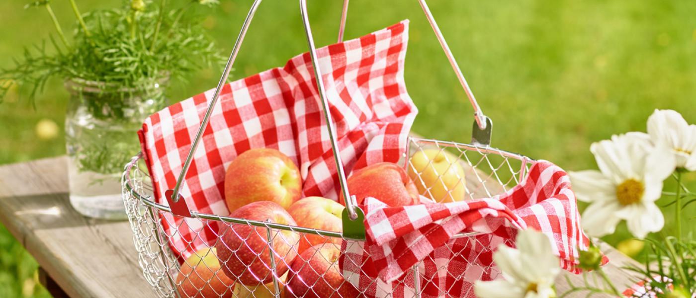 Wellant – der Allergiker Apfel jetzt auch für den Hausgarten