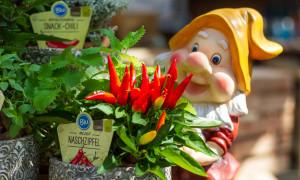 Knackig frisch und gesund – Gemüse aus dem eigenen Garten