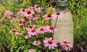 Inspiration aus dem Loki-Schmidt Garten