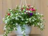 Sommerblumen Ampel