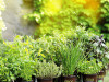 La Bio Gartenkräuter