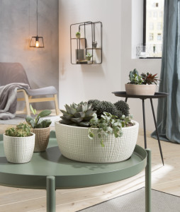 Rostock Gartencenter | Pflanzen Indoor