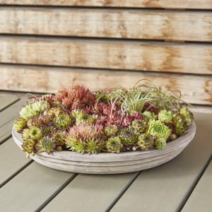 Rostock Gartencenter | Für jede Topfpflanze den passenden Pflanzkübel